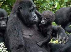 3-Day Gorilla Trekking Mist and Batwa Experience Tour