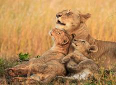 4 Days Northern Tanzania Wildlife Safari Tour