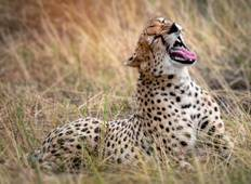 5 Day Wildlife Galore Tanzania Safari Tour