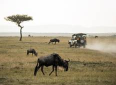 3 Day Top Notch Tanzania Safari Tour