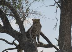 11 Days  Botswana Northern Experience Tour
