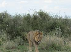 9 Day Discover Botswana Safari (Accommodated) Tour