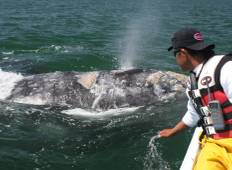 Meet The Whales in San Ignacio Lagoon Baja Mexico Tour