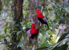 Ecuador | Birding Photographic Northwest and East Slope Private Tour Tour