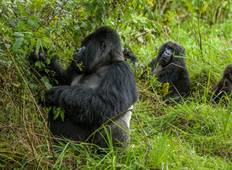 3 Days Rwanda Gorilla and Golden Monkeys  Tour