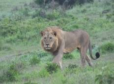 7  Days Big Five Safari Tour