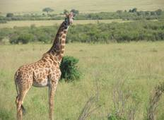 3 Days 2 Nights Tsavo East & West Kenya Safaris Tour