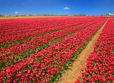 Tulips of Northern Holland 2020 Tour