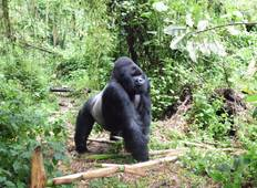 Lowland Gorillas trek in Kahuzi-Biega (3days/2nights) Tour
