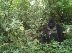 Mountain Gorilla trek in Virunga National Park (3days/2nights) Tour