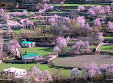 10 Days Hunza Valley Cherry Blossom Tour Pakistan Tour