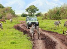 Safari in Tanzania: Lake Manyara Serengeti Ngorongoro Cater and Tarangire National Park - 6 Days Tented lodge Tour