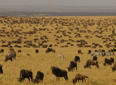 Private Tour: Arusha National park, Lake Manyara, Serengeti, Tarangire & Ngorongoro crater - 8 Day Tanzania budget Tour