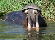A 16 Days Wildlife and Scenery Tour Around Uganda Tour