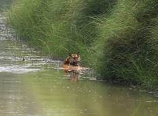 Bardiya National Park Jungle Safari - 3 Nights / 4 Days Tour