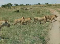 Kenya and Tanzania Overland Safari - 14 Days Tour