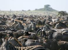 6 days Migration Safari-recommended from November to April / 1 Night Stay in Arusha. Tour
