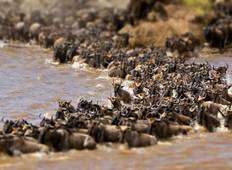 Maasai Mara Wildebeest Migration 2020 Safari Tour