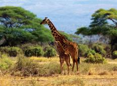 3 Days Amboseli National Park Tour