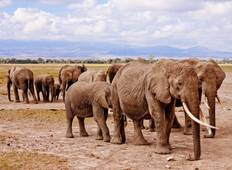 7 Days Masai Mara, Lake Nakuru and Amboseli budget Safari Tour