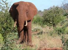Four Day Red Elephant Safari - Tsavo West and Amboseli Tour
