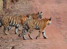 Rajasthan Wildlife tour Tour