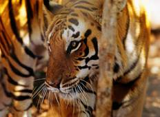 Golden Triangle Tour with Ranthambore Tiger Reserve  Tour