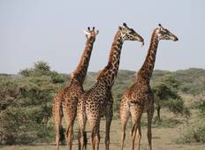 Matata Tanzania Safari - 9 Days Tour Tour