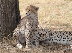 Eleven Day Kenya and Tanzania Circular Lodge Safari Tour