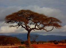 Six Day Best of Kenya and Tanzania Safari Tour