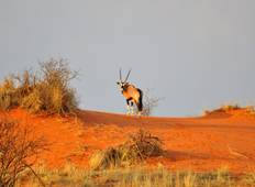 Namibia Classic Self-Drive Safari Tour