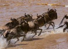 Group Joining Serengeti Migration Safari Tour