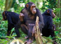 4  Day Uganda Chimpanzee, Wildlife and Gorilla Safari Tour