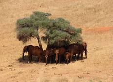 5 Days Amboseli Tsavo West Tsavo East Wildlife Tours Tour
