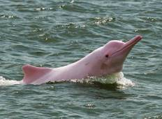 3 days Amazon Jungle tour with Pink Dolphin watch from Iquitos Tour