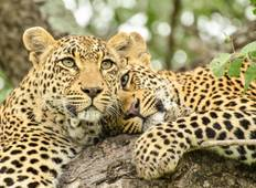 Kruger Nationalpark und Sabi Sands Safari - 3 Tage  Rundreise