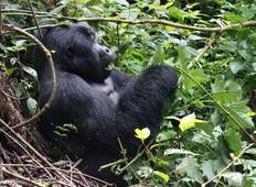 11 Days Uganda Plus Gorillas  Tour