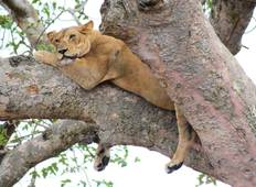 Wildlife Tour to Queen Elizabeth National Park Safari Tour
