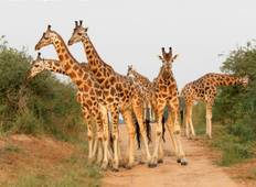 Murchison Falls & Kidepo Valley National Park Safari Tour