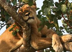 Wildlife Safari zu den Murchison Falls & Queen Elizabeth Rundreise