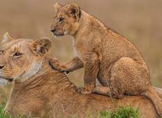 3 Days Kenya\'s Masai Mara Budget Joining safari Tour