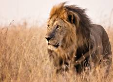 5 Days Masai Mara, Lake Nakuru and Lake Naivasha budget Joining Safari Tour
