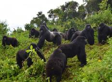 Uganda Gorilla & Active Adventure Vacation Safari Tour