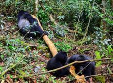10 days of Uganda Gorilla Encounter, Wildlife & Kigali City Tour Tour