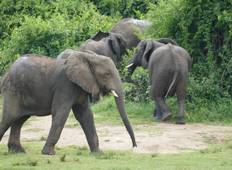 3 Days Ultimate Big Five Wildlife Encounter In Murchison Falls National Park Tour