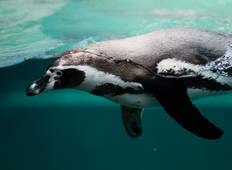Fly & Cruise: Ultimate Antarctica - Weddell Sea & the Falkland Islands Tour
