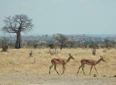 3 – Days Essence of Tanzania Tour
