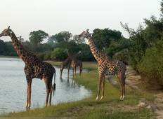 10 Days Southern Circuit Combination Safari Tour