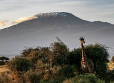 Machame Route - 7 Days Tour