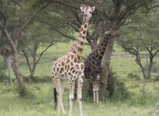 8 Days of Primates, Wildlife and Water Rafting Uganda Safari Tour